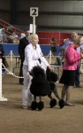 the 1st  show in Canada, owned, groomed , handled by Piia Oranen